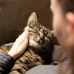 Как правильно организовать кормление кошки?