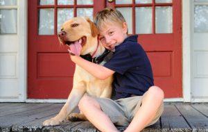 Советы от экспертов: учим собаку командам