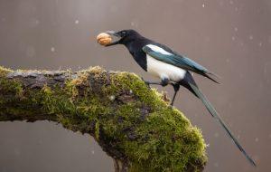 Бывают ли птицы ядовитыми?