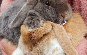 Пушистый друг – кролик