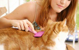Кошка в доме: ухаживаем за шерстью