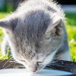 Приучаем кота к домашней еде