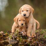 Факты о собаках, о которых вы не знали!