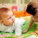 Грудной ребенок и собака: правила адаптации