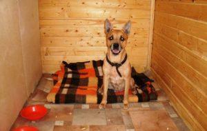 Человек и домашние питомцы: как правильно содержать собаку