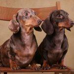 Как вырастить послушного щенка?