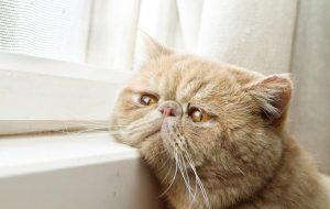 В чем секреты долголетия кошек?
