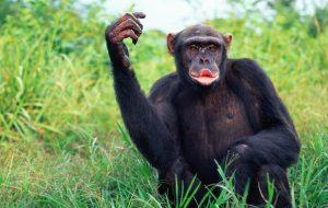 Ученые выяснили: у животных тоже есть модные тренды и инфлюэнсеры