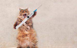 В России зарегистрировали первую в мире вакцину от коронавируса для животных, цена которой вас удивит