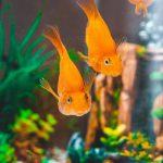 Современные красивые и led аквариумы: какие они?