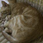 Почему кошка не ест сухой корм – 6 причин кошачьей голодовки и как помочь