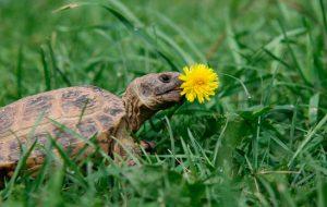 Почему черепаха не ест — основные причины странного поведения