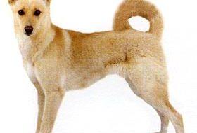 Как выбрать шампунь для собаки?