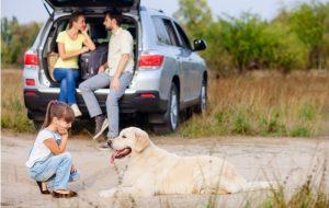 Почему вам с партнером ни в коем случае нельзя заводить кошку или собаку