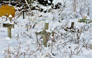 Кладбище домашних животных: россиян оштрафуют за похороны кошек и собак