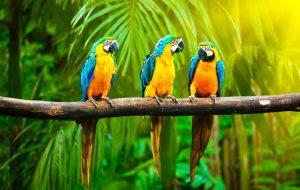Как общаются попугаи?