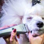 Машинка для стрижки собак - как выбрать лучшую модель?