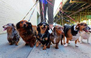 Выгул собаки: как часто и как долго