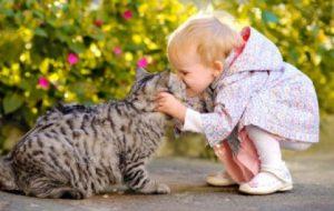 Развлекаем заскучавшую кошку: рецепты успеха