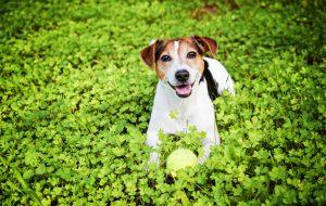 Оставляют ли собаки свою мочу, чтобы пометить территорию?