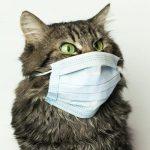 Коронавирус кошек: опасен ли для человека?